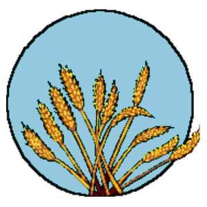 wheat20